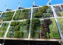 Cómo hacer un jardín vertical casero y económico en casa