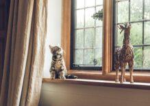 Tips para mantener una casa limpia y ordenada conviviendo con mascotas